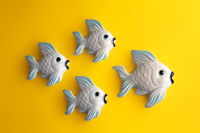 wallfish12